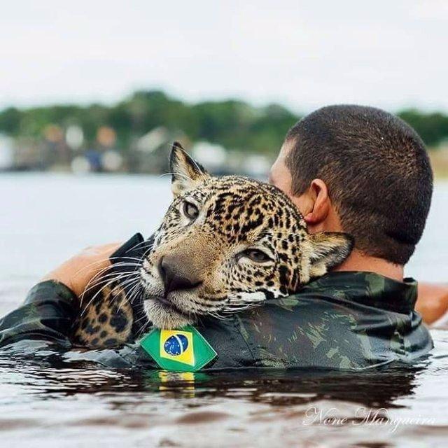 Спасенный от наводнения ягуар обнимает людей, как домашний кот