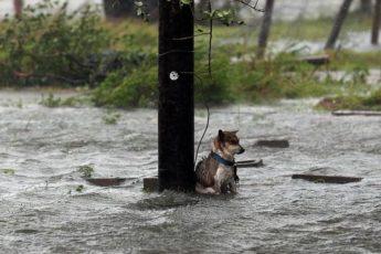 """Фотограф спас собаку, которую бросили хозяева, убегая от урагана """"Харви"""""""