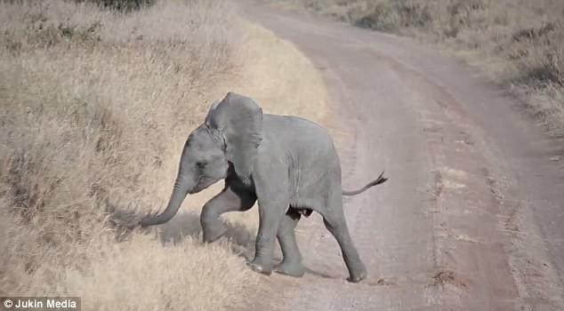 ответ слонихи на истерику слоненка
