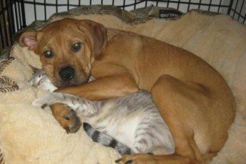 как уживаются коты и собаки