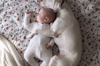 собака просто неразлучна с этим малышом