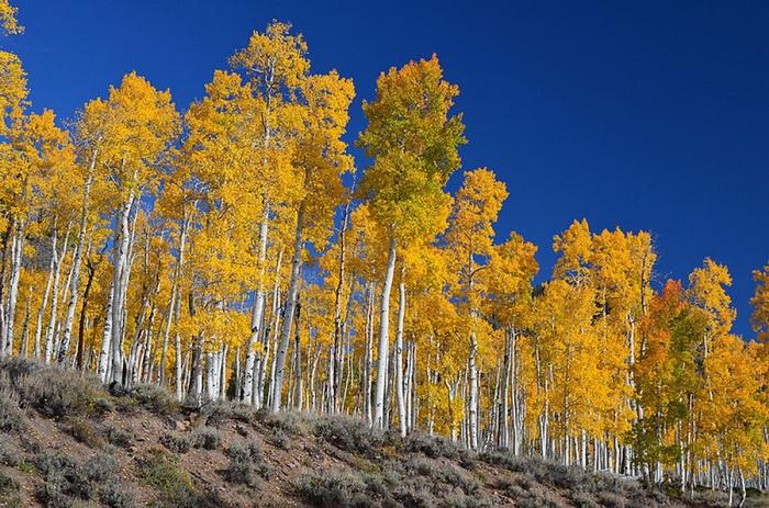 Бонус: сколько здесь деревьев?