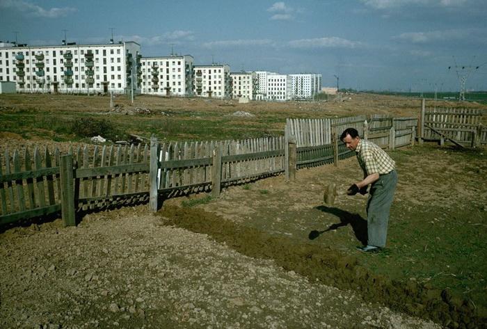 Огород на окраине Москвы. Зюзино, 1964 год