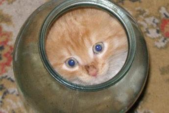 Котенок не мог вылезти из банки